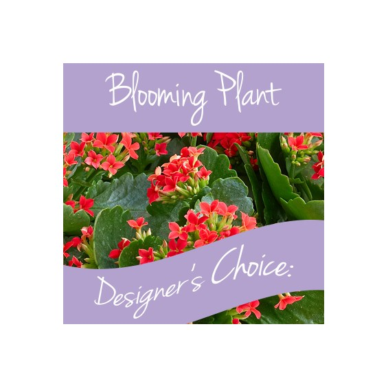 Blooming_Plant_Designers_choice